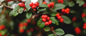 A Dose of Holiday Healing