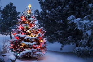 Brightly Lit Snow Covered Holiday Christmas Tree Winter Storm