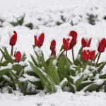 Welcome, Fickle Spring!