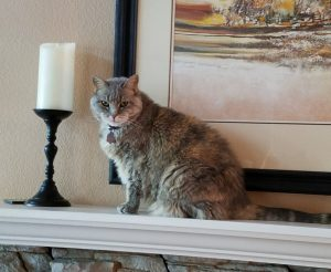Molly on Mantel
