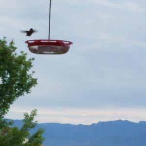 Hummingbird '20