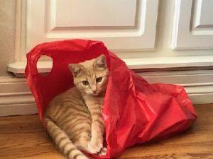 """""""Look! I'm a present."""""""